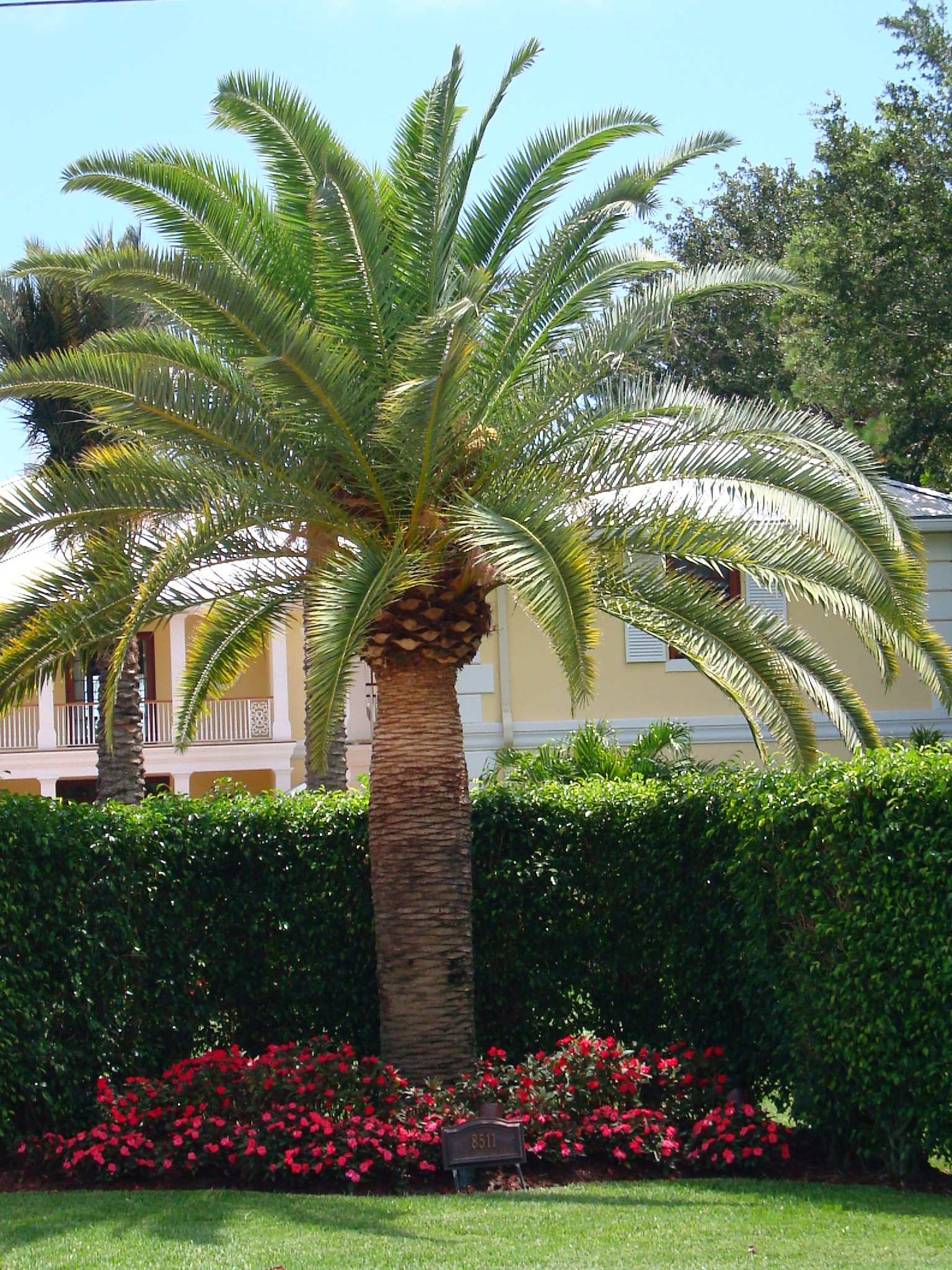 Plants And Palms That Are Cold Hearty Bongard Landscaping