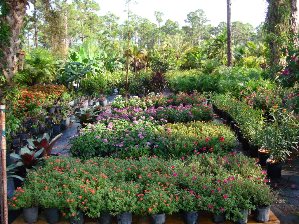 Bongard Landscaping Our Nursery And On Site Grown Plants