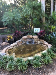 waterfeature nursery best
